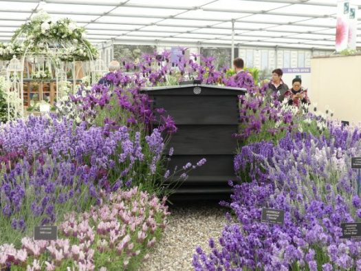 A beautiful bee hive surrounded by lavender at Chelsea Flower Show