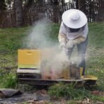 Beekeeping for Newbees and Wannabees