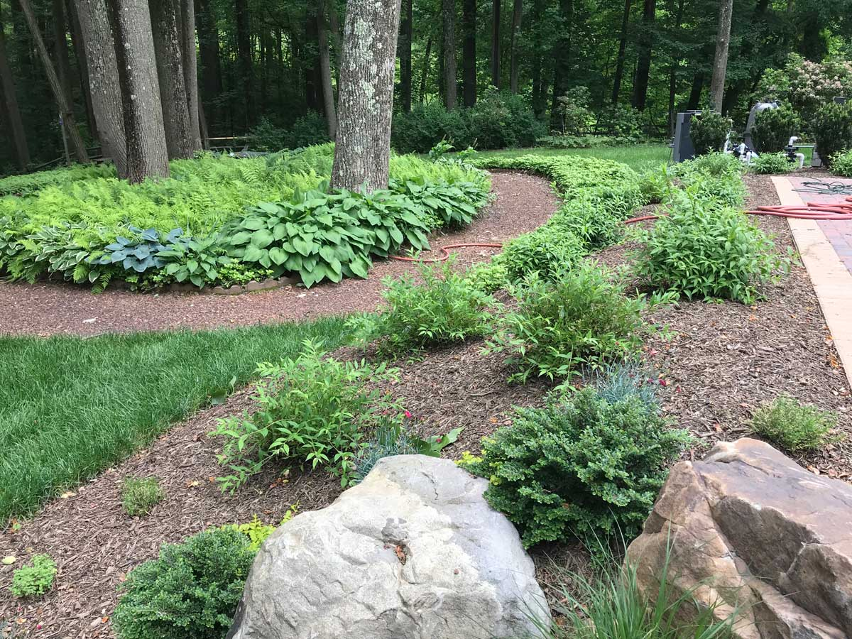 Woodland Plantings
