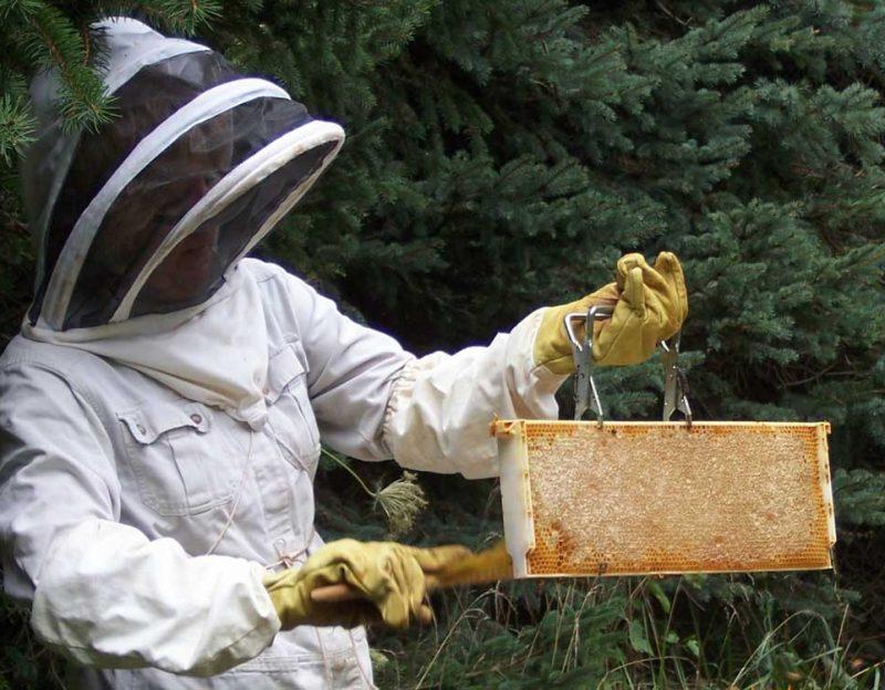 About-me-Beekeeping-&-Pollinators-sm